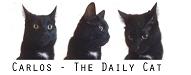 carlos-the-cat.blogspot