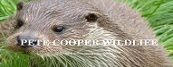 pet cooper wildlife